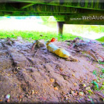 WebAtude Photography New Orleans Photographer For Weddings Parties Events